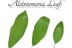 alstroemeria---single