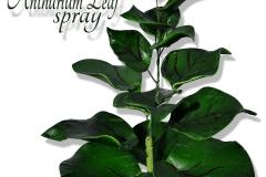 anthurium-leaf-bunch