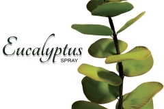 eucalyptus-spray