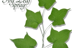 ivy-leaf-spray