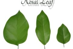 rosal-leaf-single