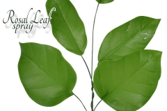 rosal-leaf