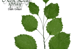 rose-leaf-dark-green