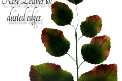 rose-leaf-dusted-bunch