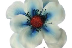 anemone-blue