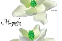 magnolia-white
