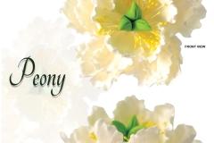 peony-white
