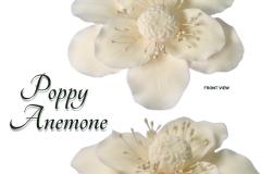 poppy-anemone-white