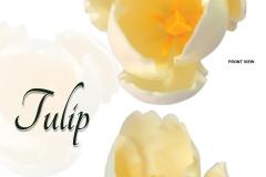 tulip-white01