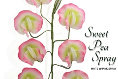 sweet-pea-spray-15-1087wpk