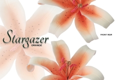 STARGAZER-15-1041-SO