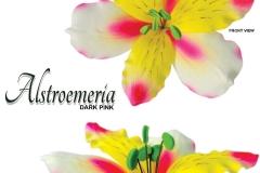 alstroemeria-15-1036
