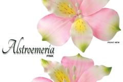 alstroemeria-15-1036WHLPK