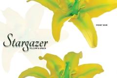 stargazer-15-1048G