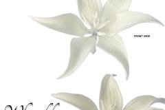 white-lily-15-1048-M