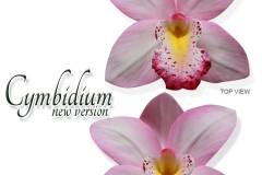 cymbidium-new-version-pink