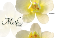 moth-orchids-white