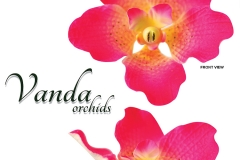 vanda-orchids-red