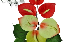 Anthurium-with-leaves
