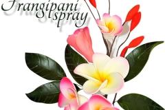 Frangipani-spray-16-1122