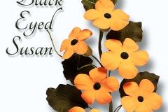 black-eyed-susan