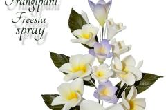 frangipani-freesia-spray