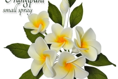 frangipani-small-spray