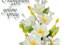 frangipani-yellow-spray