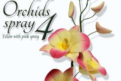 orchids-spray-4